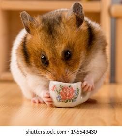 hamster drinking coffee/ hamster drinking coffee