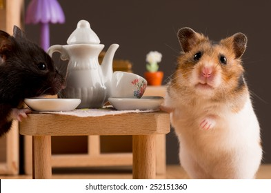 hamster drinking coffee/hamster drinking coffee