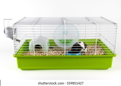 Hamster eating in cage on white background