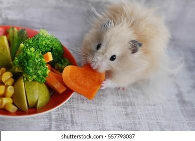 Hamster eating carrots.