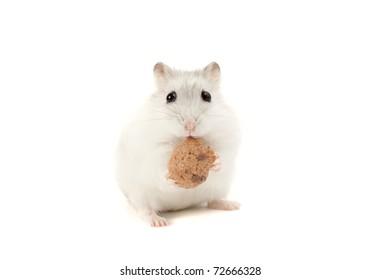 Hamster eating musli, isolated on white