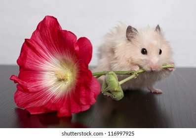 THE HAMSTER GNAWS THE FLOWER