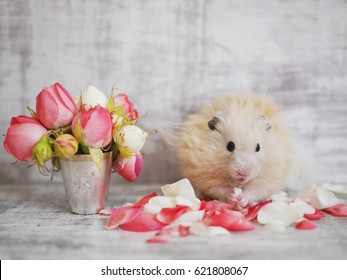 Hamster next to the flowers. Hamster on a background of bleached board.