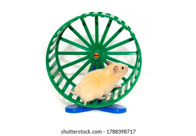 Hamster on a running wheel on a white background isolated.