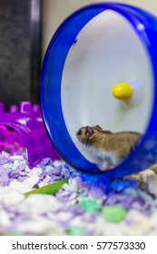 Hamster running on wheel with motion
