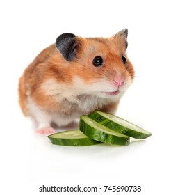 Hamster with slices of cucumber
