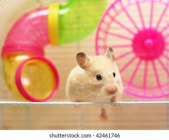 hamster still sits in a cage