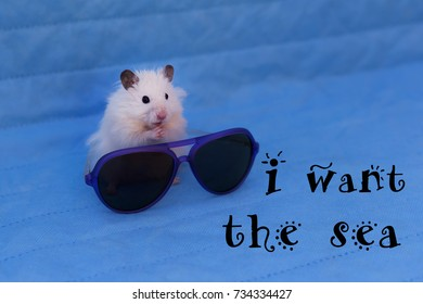 Hamster Accessories Stock Photos, Images & Photography