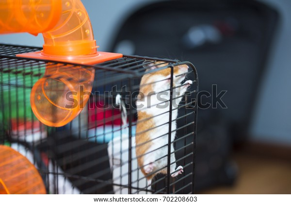 Hamster trying to escape from the cage