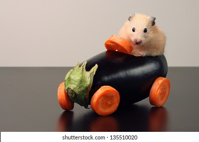 Hamster in a vegetables made car
