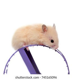 Hamster and the wheel isolated