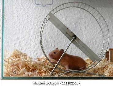 Hamster Wheel Pet Animal