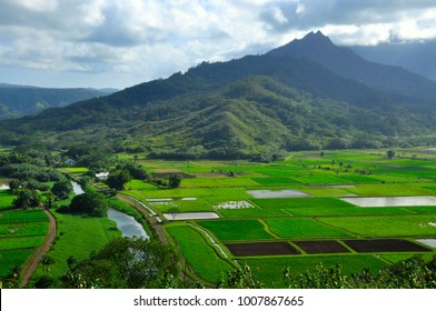 Hanalei valley with taro fields and mountains, Kauai, Hawaii, USA