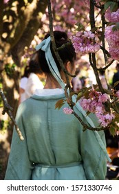 Hanami celebration. Young woman (back view; blurry unrecognizable) in traditional kimono admiring cherry blossom in Sceaux park near Paris (France). Blurry people crowd and trees at background.