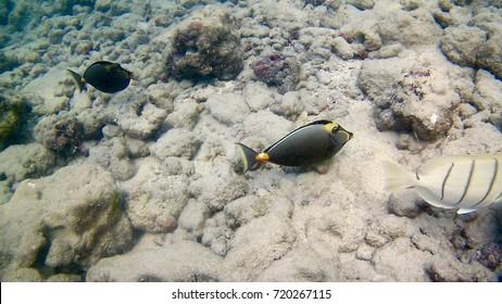 Hanauma Bay Underwater Picture
