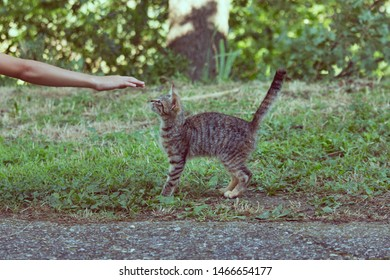 a hand is about to caress a gray tabby cat on a lawn