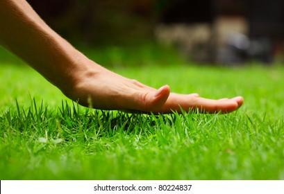 Hand above green fresh grass on a meadow. Shallow DOF