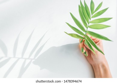 Woman's hand with beautiful trendy summer green manicure holding palm plant leaf. Shadow on a white background.