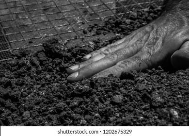 hand, black and white, closeup, work, soil