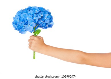 Hand with blue hydrangea flowers