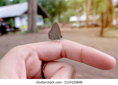Woman's hand with butterfly sitting on her finger. Little butterfly on girl hand.