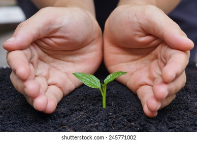 hand carefully nurturing a young green plant / growing a young tree