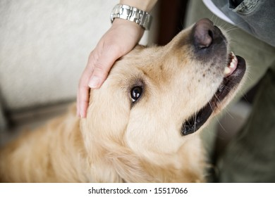 Hand caressing dog's head