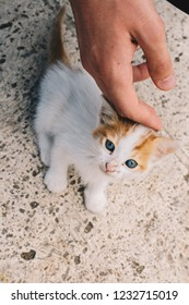 Hand caressing a small white kitten in the view