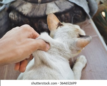 hand catch on the neck of cat