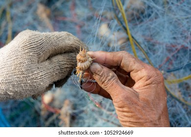 Hand is catching trawl to find crab and fish. Details of fishermen skin