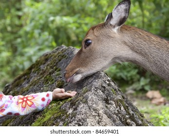 Hand of a child by giving food to a deer.