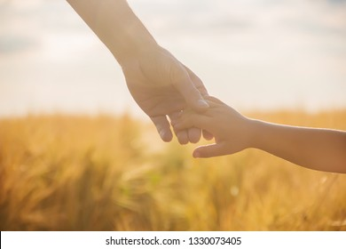 the hand of child and father on wheat field nature.