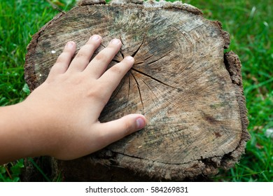 Hand of a child on a cut tree trunk, on a lawn.