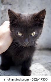 Hand of child stroking head of cute little kitten on white background