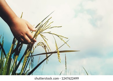 hand of child touching rice in paddy field
