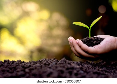 The hand of a children are planting the seedlings into the soil.