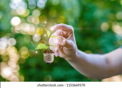 Hand clicks on sprout in the bulb. Green energy concept.