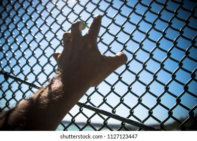 Hand clings to chain link fence; climbing to escape confinement or cross a border.
