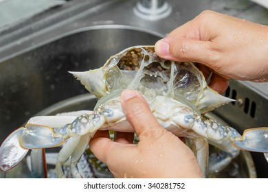 hand cooking fresh horse crab in the kitchen