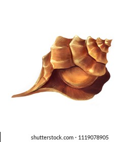 Hand drawn beautiful illustration of brown sea shell. Mollusk spiral sink realistic drawing