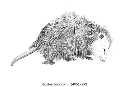 hand drawn cute animal, sketch of adorable wildlife creature, funny opossum isolated on white background