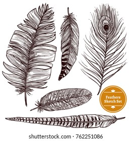 Hand drawn feathers set of different bird plumes on white background isolated  illustration