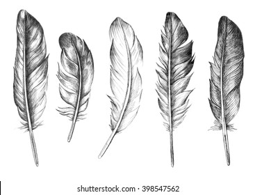 Hand drawn feathers set on white background