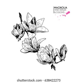 hand drawn magnolia twig. Isolated on white background. Engraved vintage botanical illustration. Use for wedding, birthday, party decoration, greeting cards, shop or brand promotion.