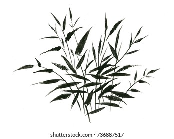 Hand drawn painting with field plants on white background