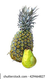 Hand drawn pineapple on white background.Watercolor colorful illustration. Tropical fruit. Handwork.