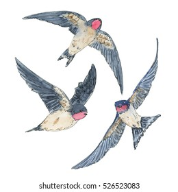 hand drawn set of watercolor isolated bird swallow on white background