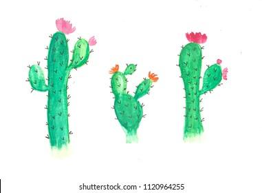 hand drawn watercolor cactus flowers