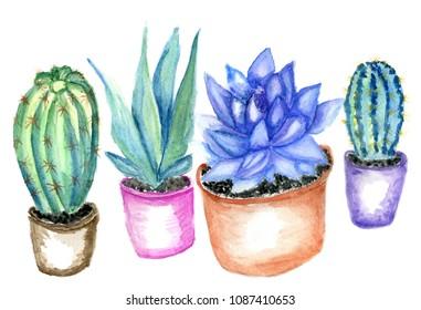 Hand drawn watercolor cactus, succulent plant illustration.