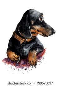 Hand drawn watercolor dog illustration. Spaniel portrait.